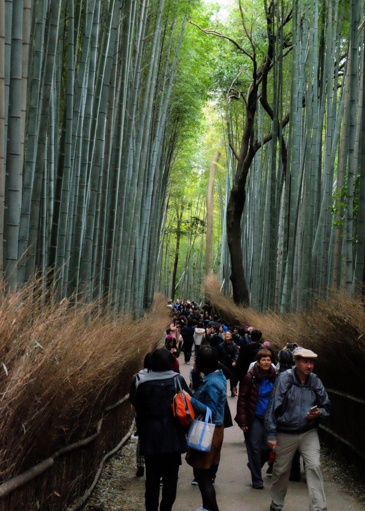 bamboo bos Kyoto