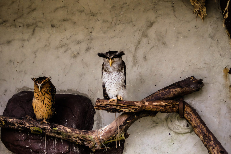 Malaysia Kuala Lumpur Bird park