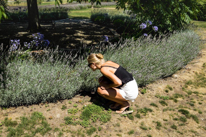 New Zealand Lavendel farm Charlotte I