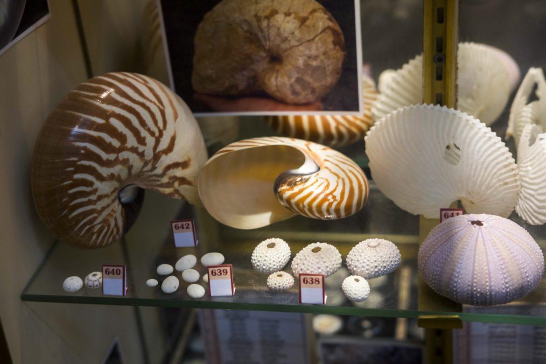 French Polynesia Shells Museum