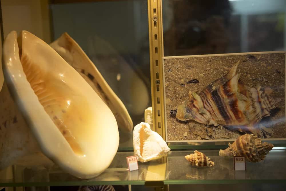 French Polynesia shell museum