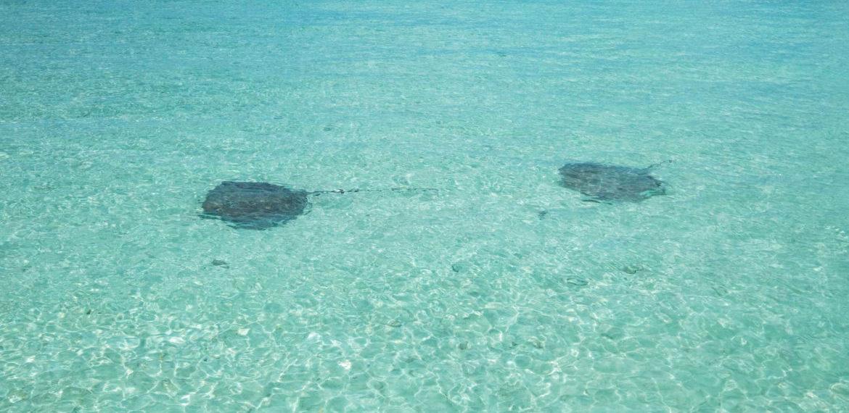 French Polynesia Bora Bora sting-rays