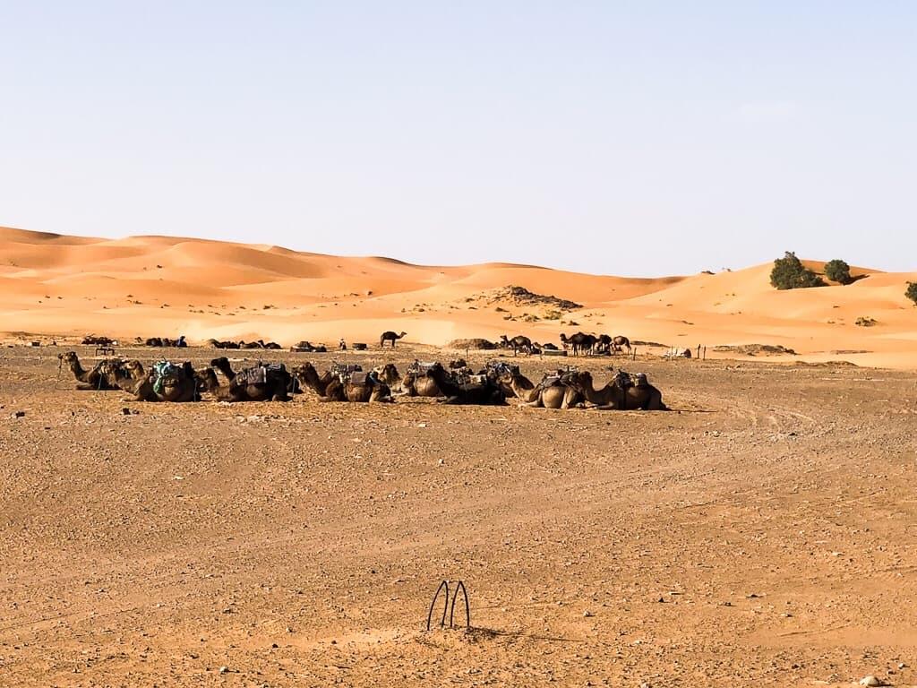 Morocco Merzouga