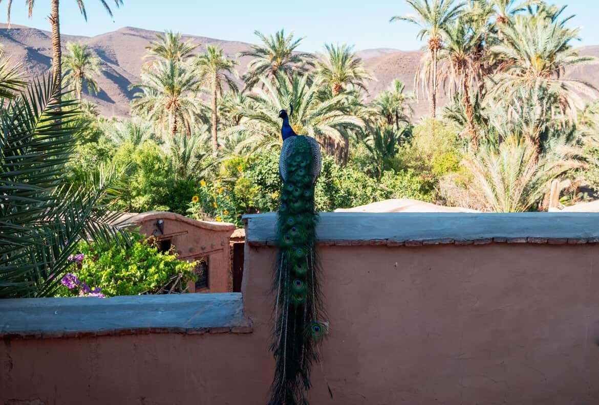 hotel Ecolodge Bab El Oued Morocco