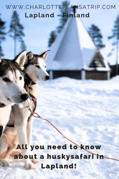 All you need to know about huskysafaries in Finnish Lapland