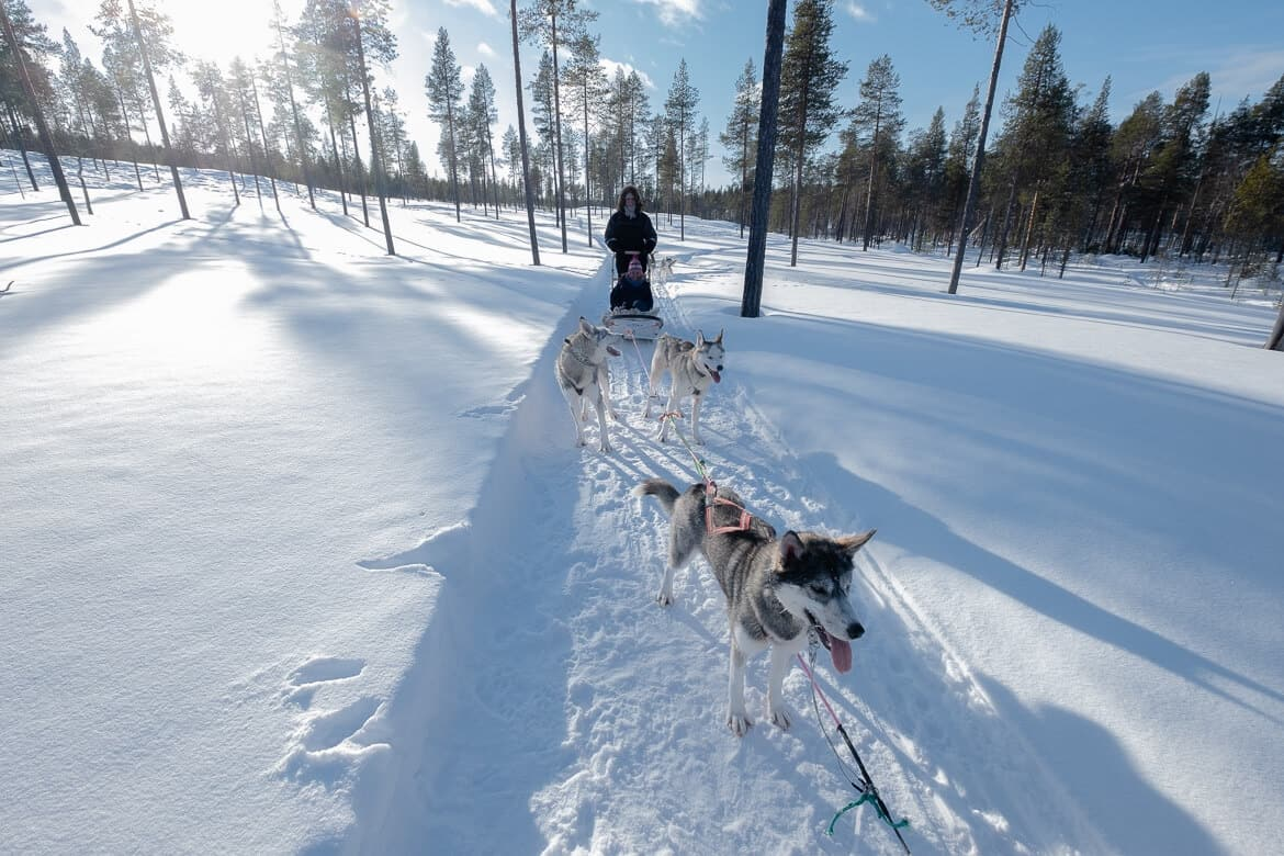 Huskydogs in Finnish Lapland