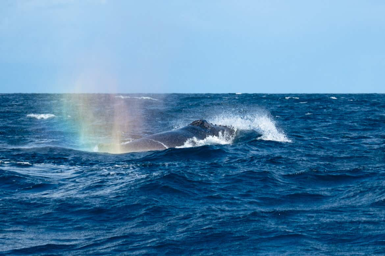 Ile Sainte-Marie Whales