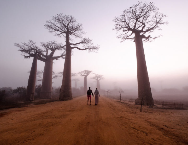 Travel guide Avenue des Baobabs: one of the most beautiful places in Madagascar!