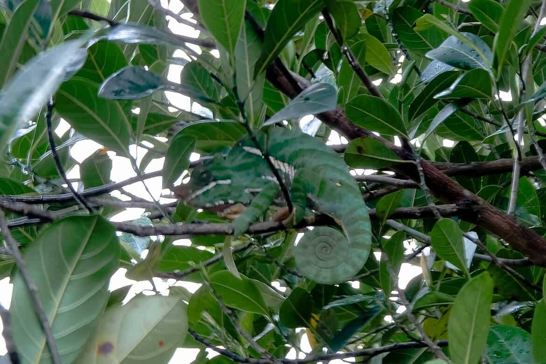 Ranomafana Madagascar