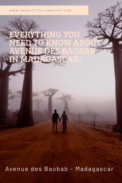 All you need to know about Avenue de Baobab in Madagascar