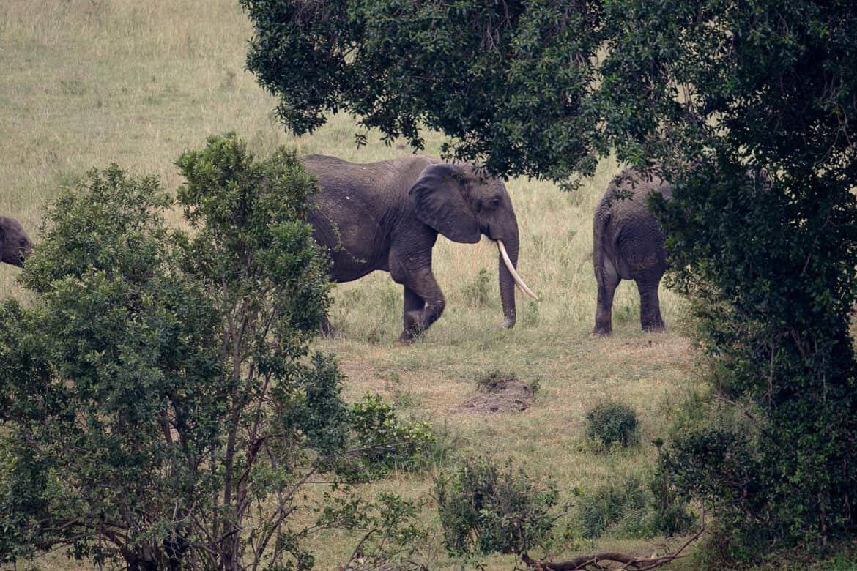 Elephants East Africa