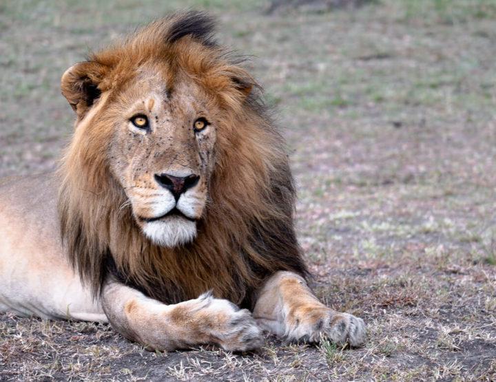 Reisgids: Hoe doe je een safari in Maasai Mara (Kenia) met een klein budget?