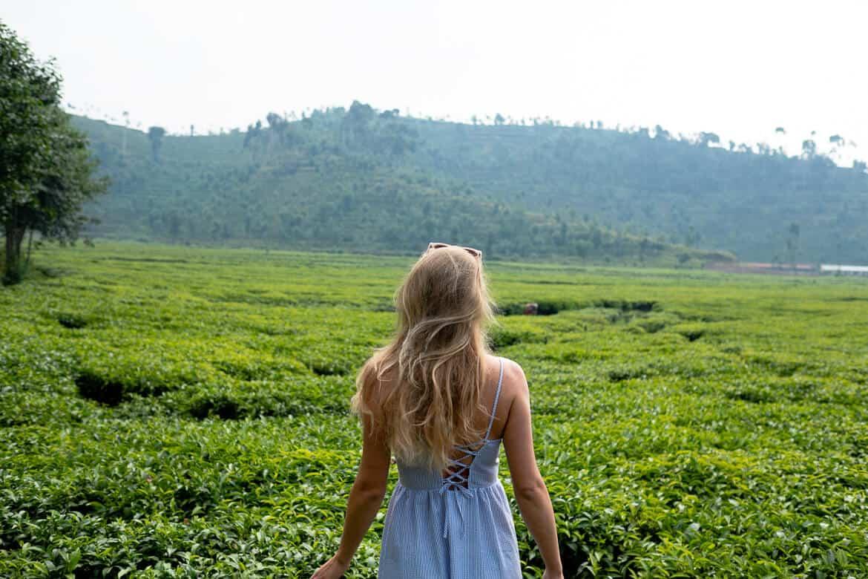 Tea Estate Rwanda