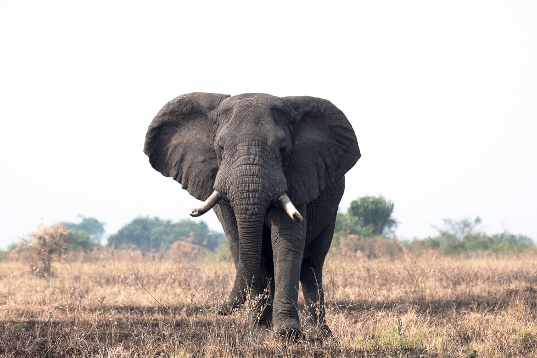 Elizabeth National Park Uganda