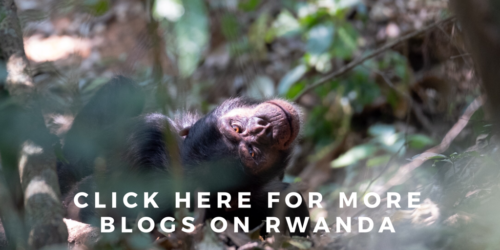 All my travel blogs on Rwanda