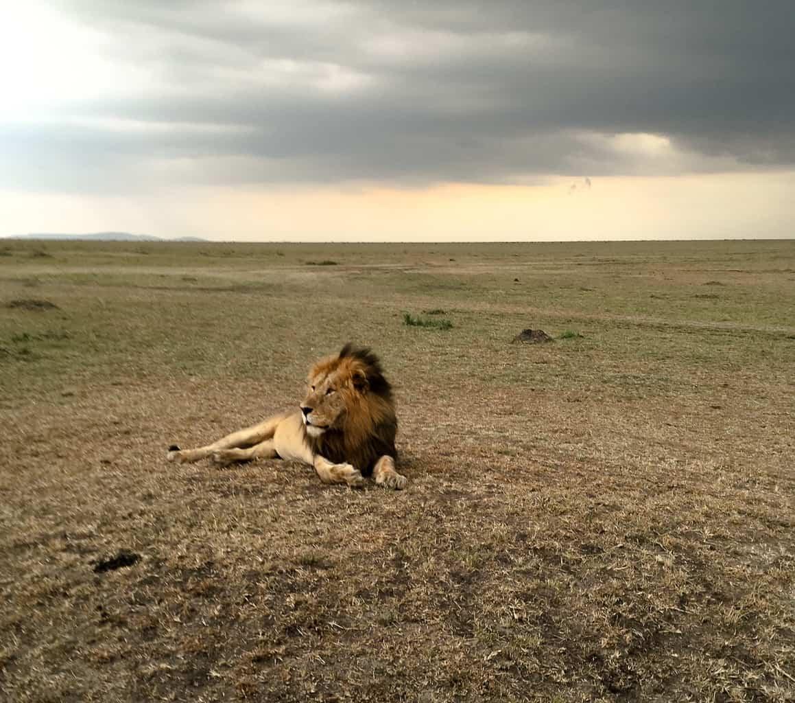 Game drive Maasai Mara Budget