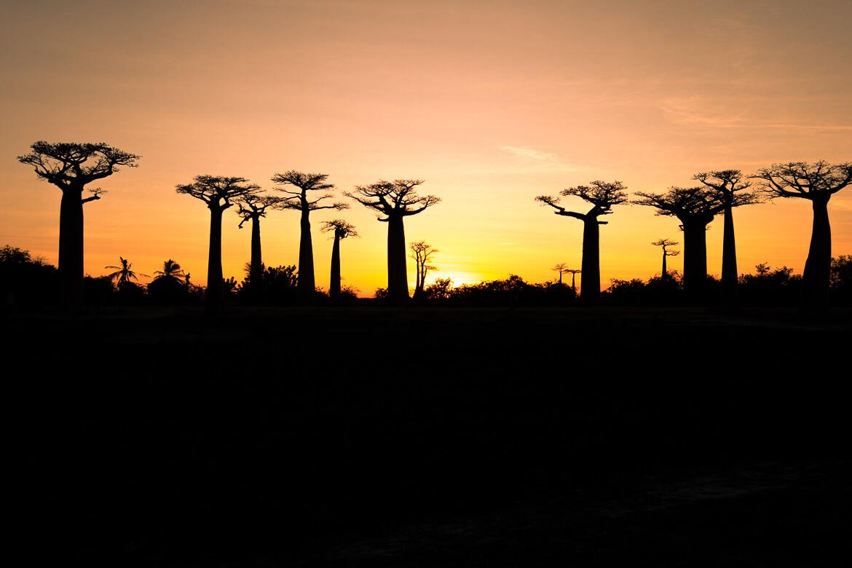 Madagascar Avenue des Baobab