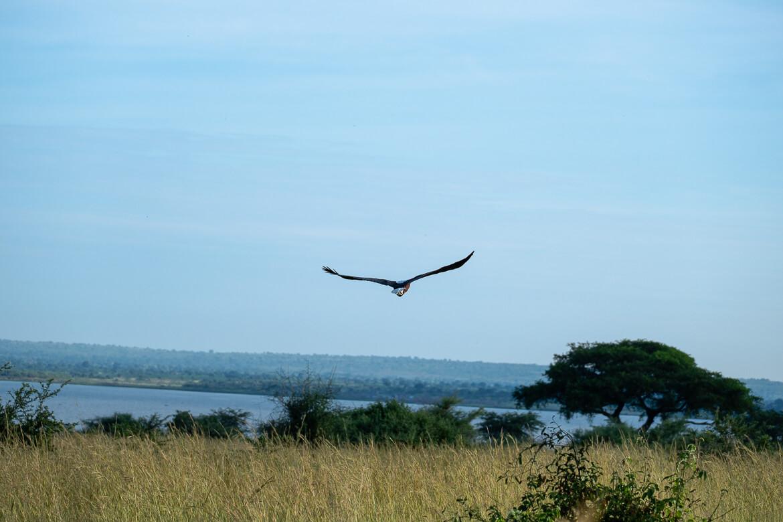 Travel guide Noosa: Birds