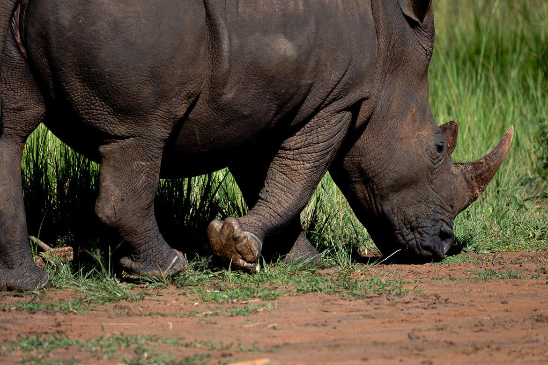 Rhino Sanctuary Uganda