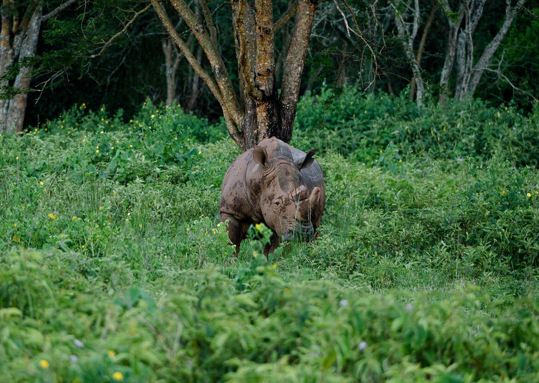 Rhino Sanctuary