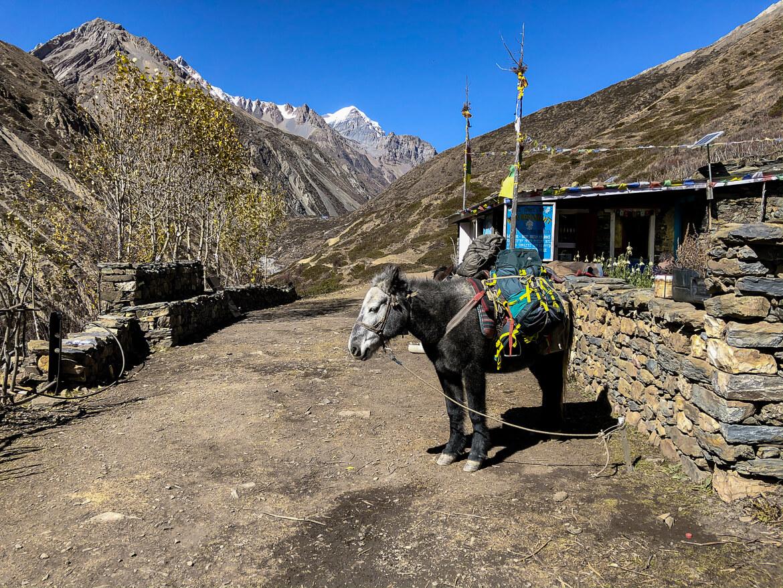 Thorong La pass (dag 9)