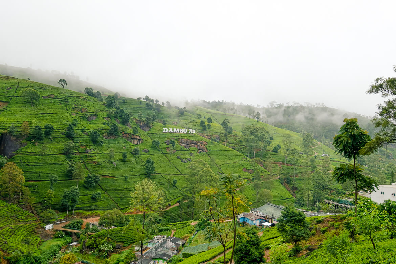 Tea blaadjes groen