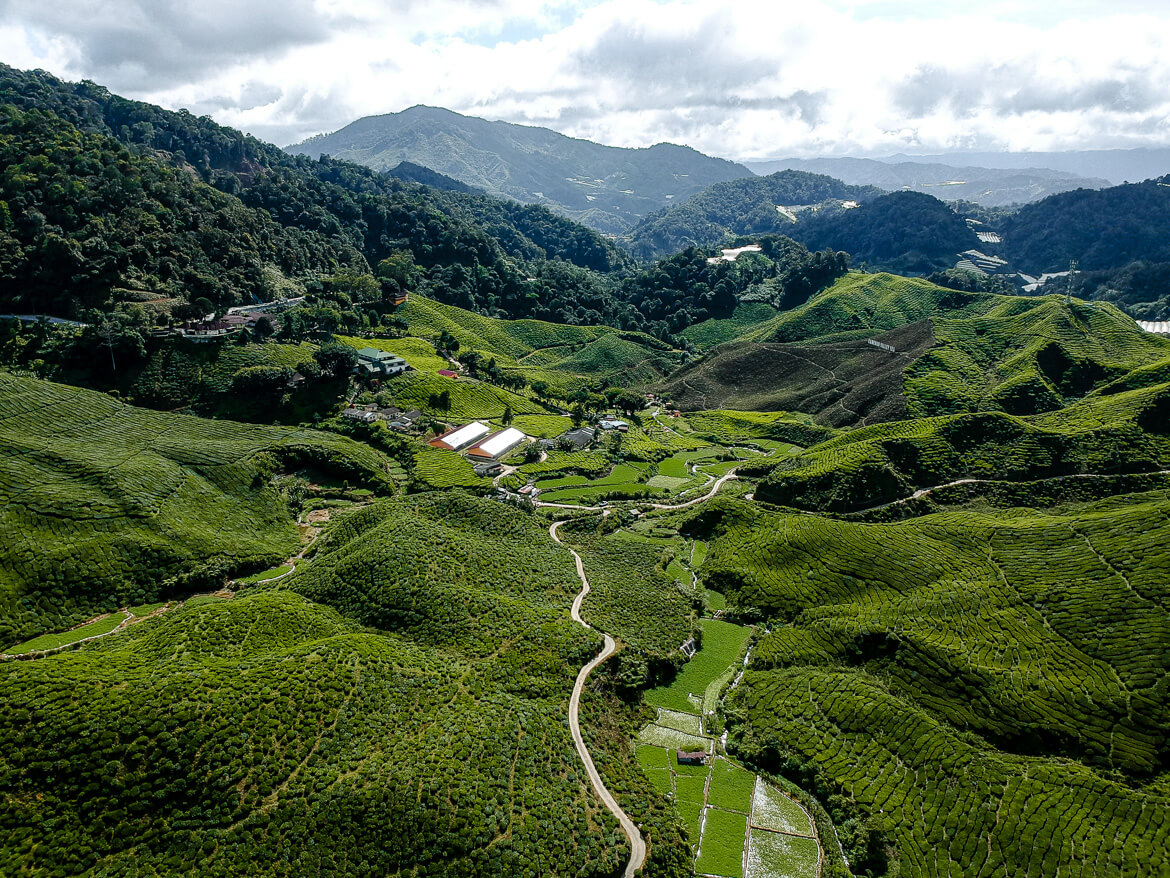 Cameron Highlands drone photography tea fields