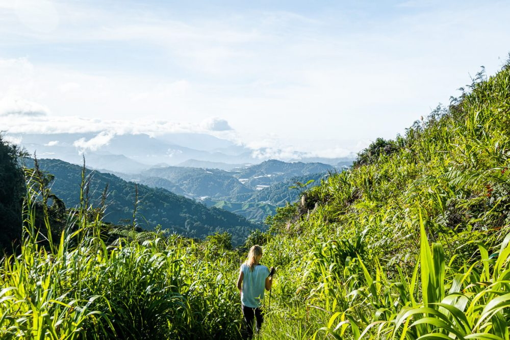 Hiking in Cameron Highlands