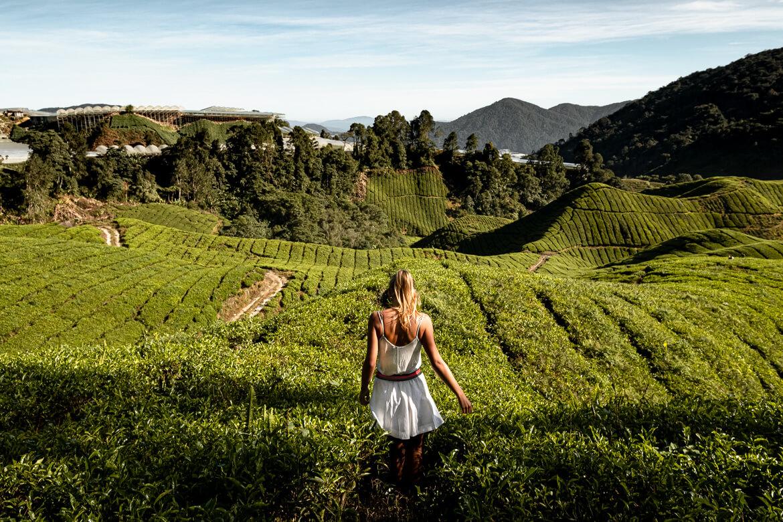 Malaysia Cameron Highlands Thea plantages