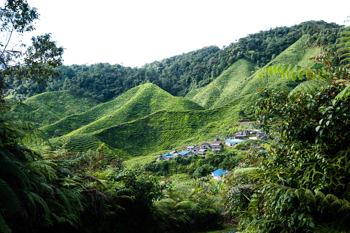Tea workers village
