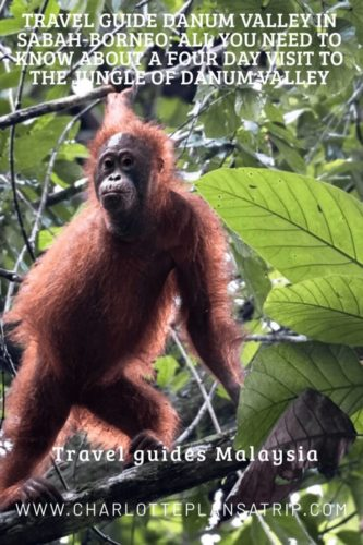 Danum Valley in Sabah, Borneo. all you need to know about a four day visit to spot orang-oetans in the rainforest