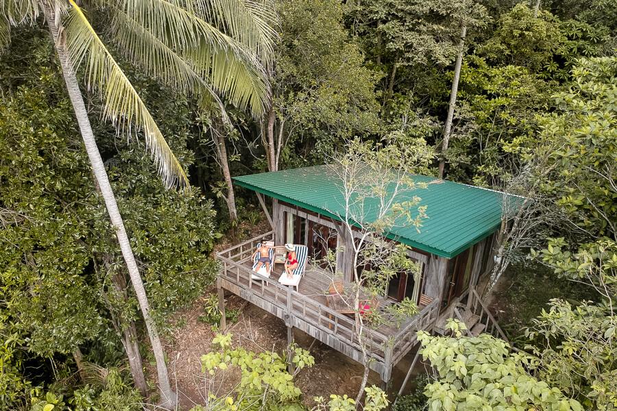 Birds view Hibiscus Tree Top Tip of Borneo Sabah Malaysia