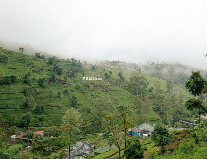 Must do in Nuwara Eliya – Sri Lanka: een bezoek aan de theeplantages!