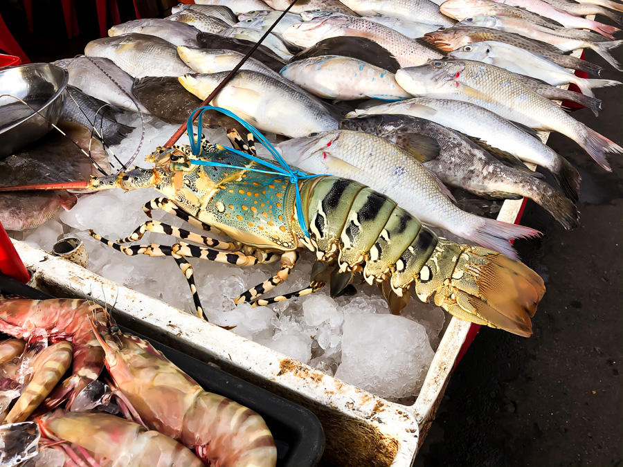 Giant Lobster Kota Kinabalu Sabah Malaysia