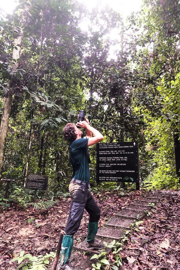 Spotting Hornbills Danum Valley Sabah Borneo Malaysia