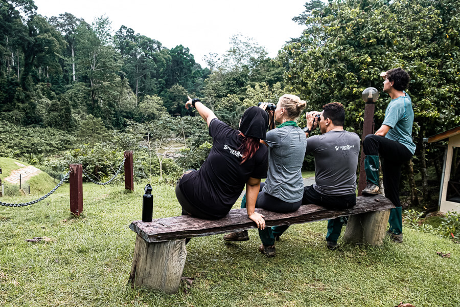 Spotting birds and apes Danum Valley Sabah Borneo Malaysia