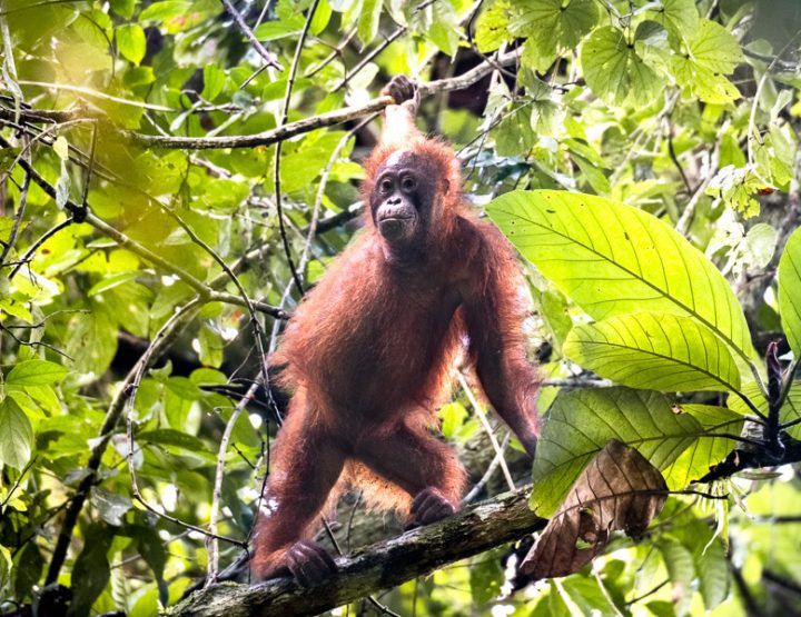 Visit Danum Valley in Malaysian Borneo: a beautiful primary rainforest full of wildlife