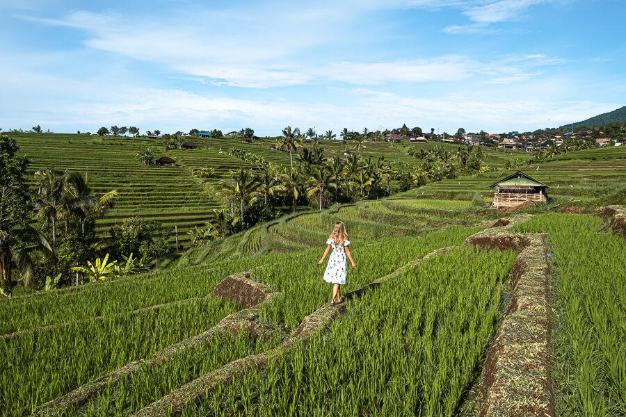 Rice fields of Jatiluwih Bali Indonesia