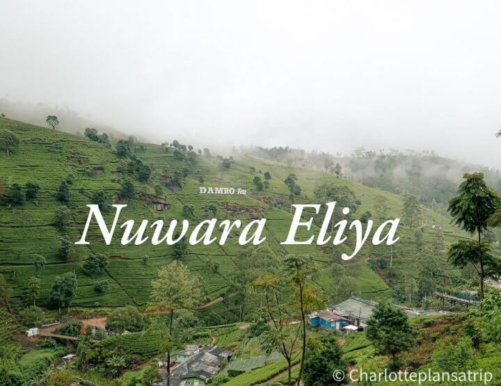 Must do in Nuwara Eliya - Sri Lanka: a visit to the tea plantations!