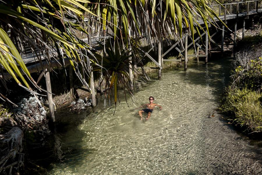 Travel Gruide Fraser island cooling of at Eli Creek