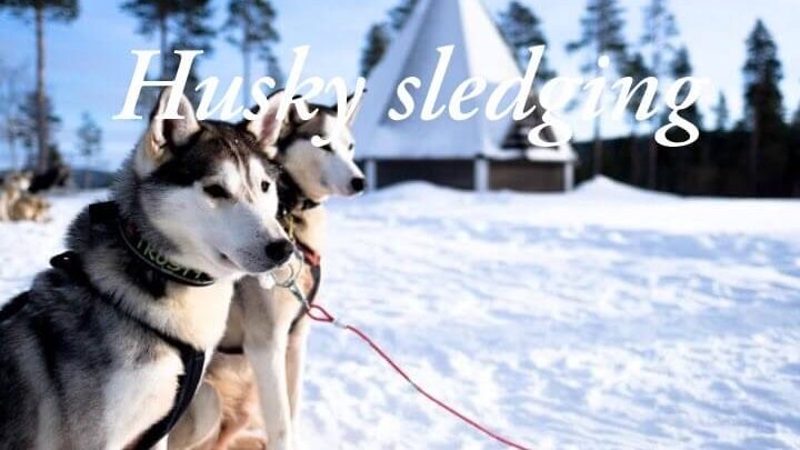 Husky safari in Lapland: All you need to know about a husky tour in Finland!