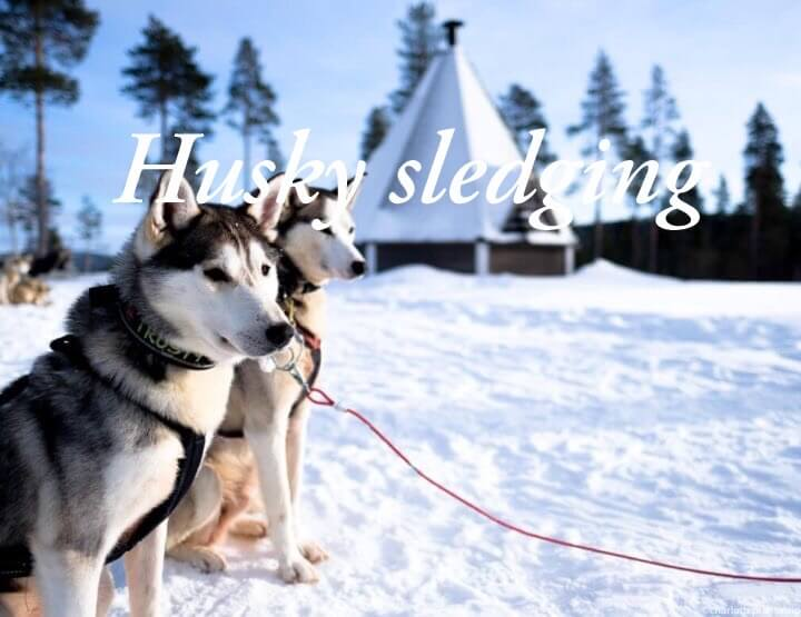 All you need to know about a husky tour in Lapland in Finland!