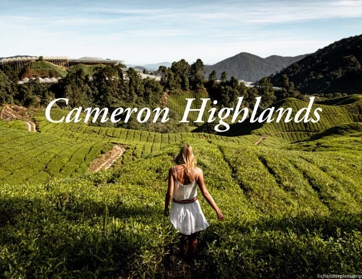 Cameron Highlands travel guide: Three days in the highlands of Malaysia