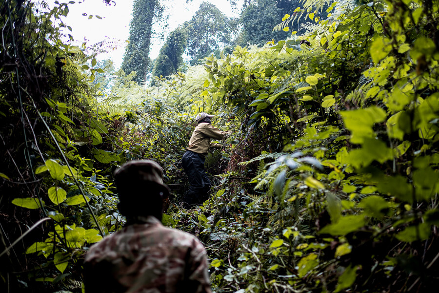 Gorilla Tracking Rangers top attraction Uganda