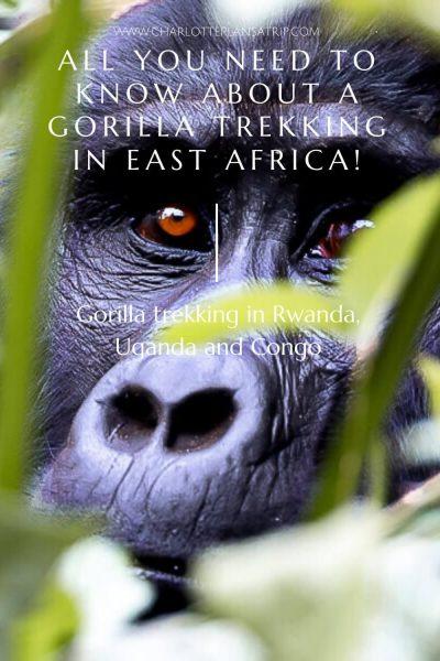 Gorilla trekking in Uganda Congo and Rwanda