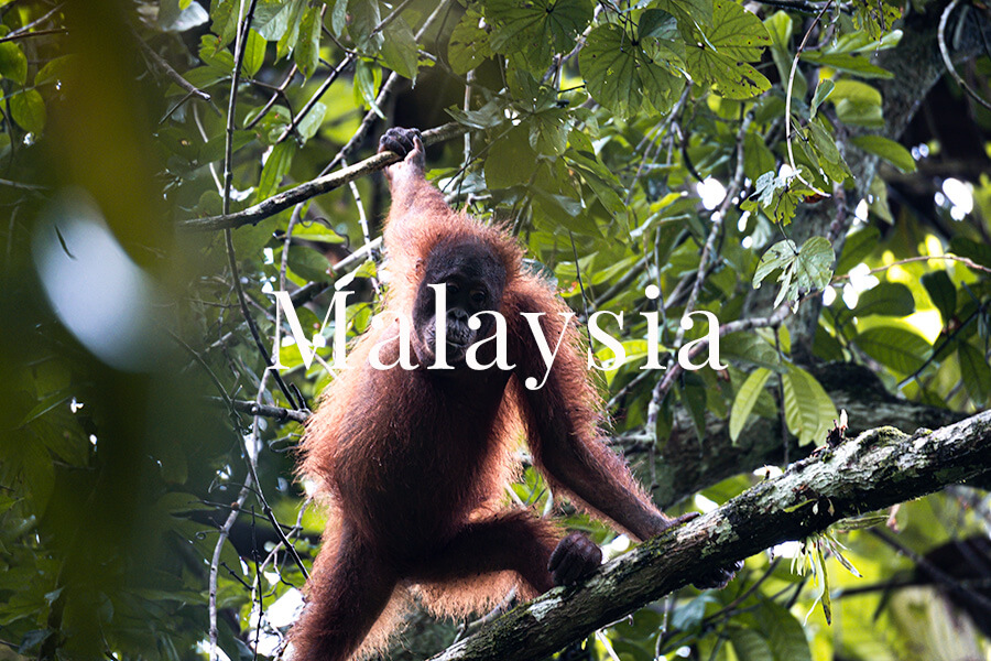 Malaysia Charlotte Plans a Trip