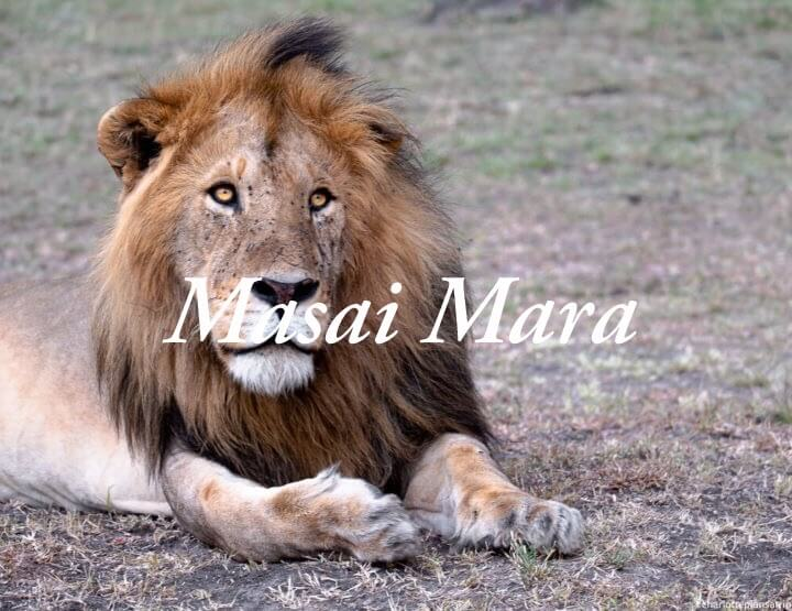 Masai Mara safari: How to do a budget safari in Masai Mara in Kenia?