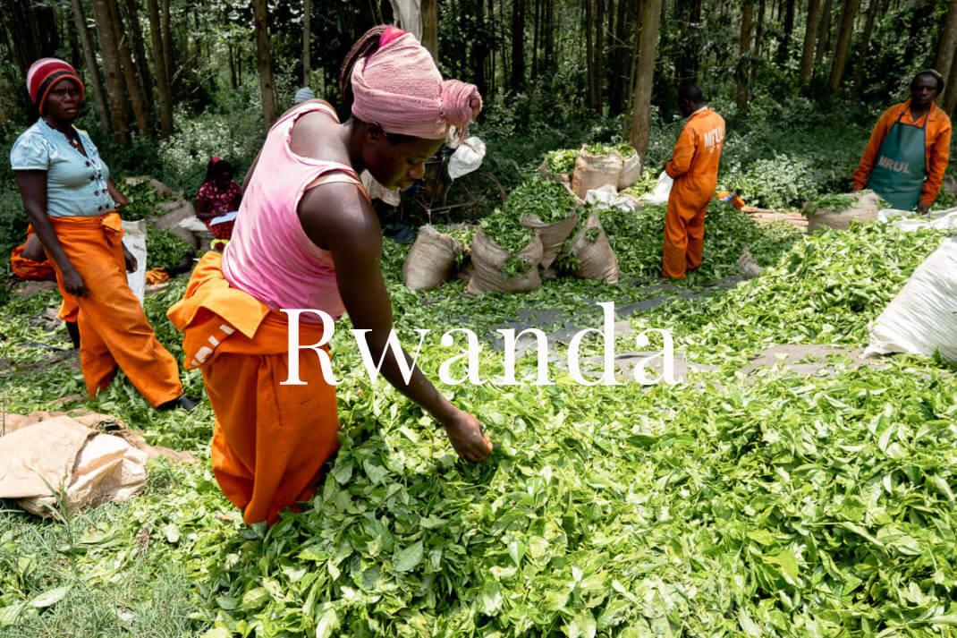 Rwanda cover photo