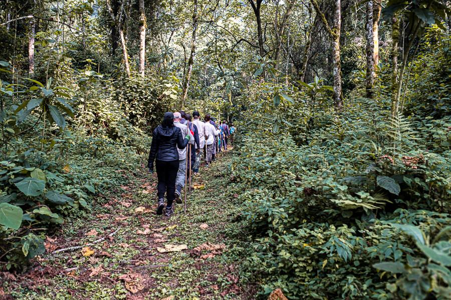 Things to do in Uganda Gorilla Track Uganda