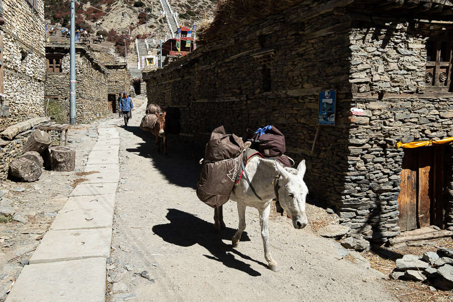 Transport in Nepal Annapurna Circuit Donkey
